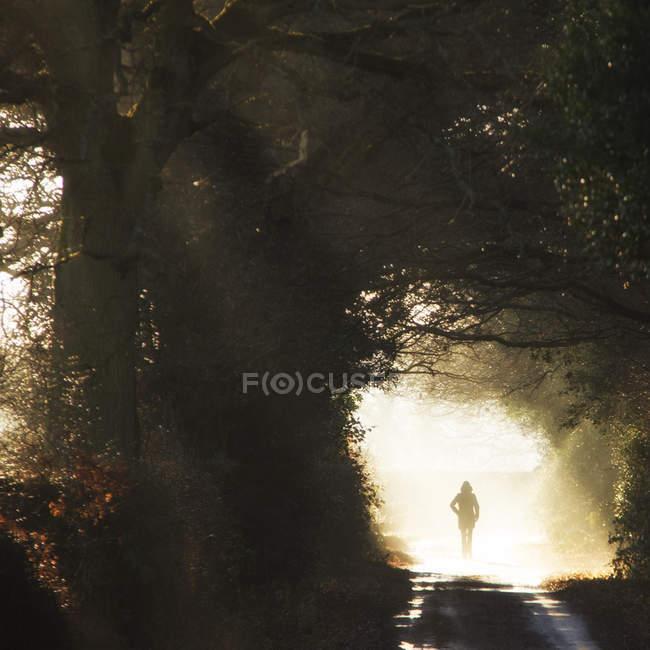 Vista posteriore della persona che cammina al sole — Foto stock