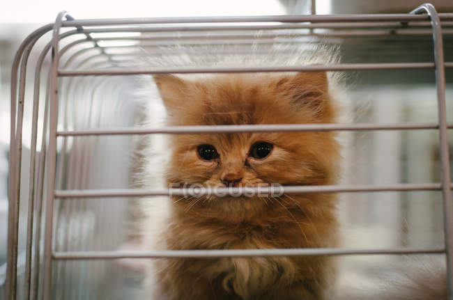 Cute adorable cat in cage, closeup — Stock Photo