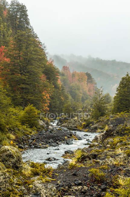 Vista panoramica sul bellissimo paesaggio fluviale, parco nazionale del conguillio, Cile — Foto stock