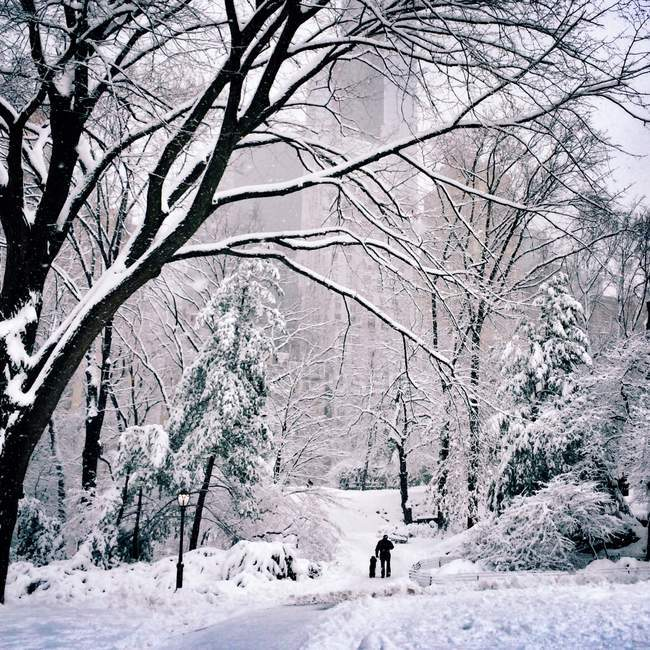 Rear view of man walking his dog in snow, USA, New York City, Central Park — Stock Photo