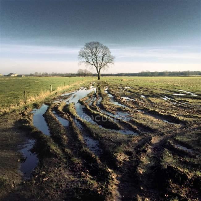 Marcas de pneu na lama e árvore solitária no Arquivado — Fotografia de Stock
