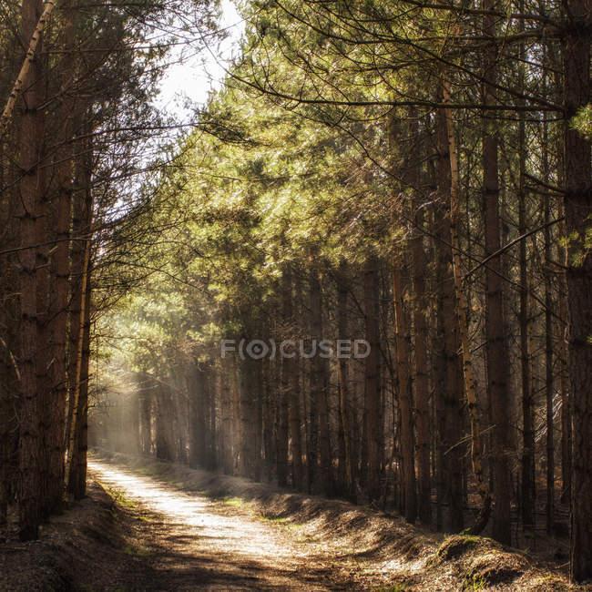 Vista panorâmica da luz da manhã, no caminho da floresta — Fotografia de Stock