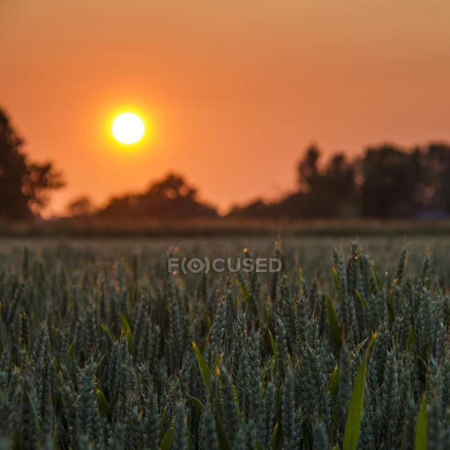 Vista panoramica del maestoso tramonto arancione sulle colture — Foto stock