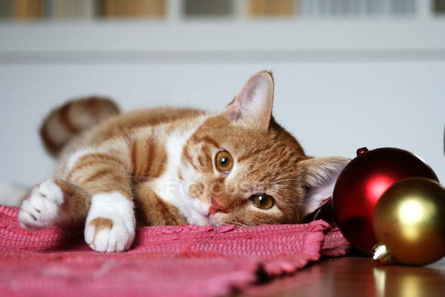 Cute fluffy kitten lying on table with Christmas baubles — Stock Photo