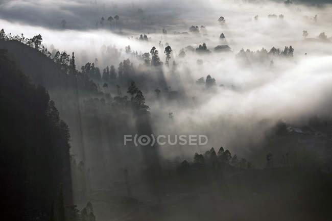 Indonesia, Bali, Kintamani, niebla de la mañana en el bosque - foto de stock