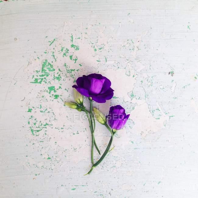 Lila Eustoma Blumen auf weißem und grünem schäbig Oberfläche — Stockfoto