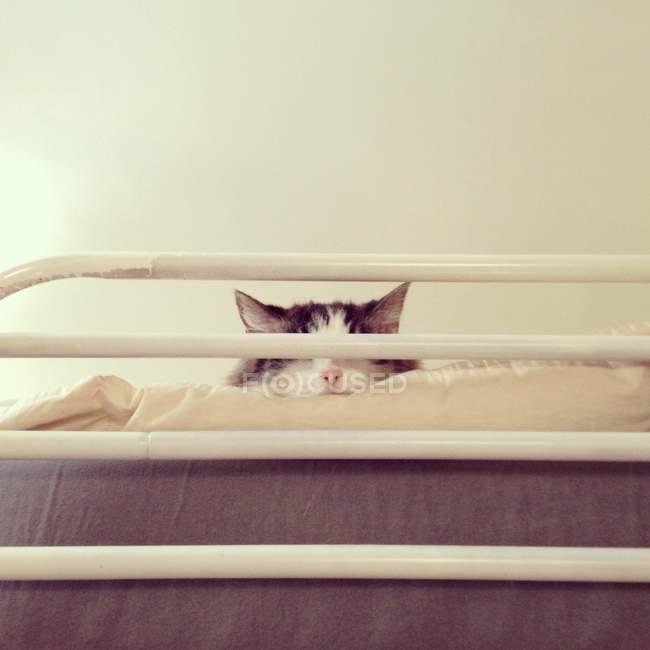Низкий угол обзора симпатичной кошки, спящей на лофт-кровати — стоковое фото