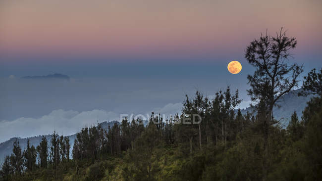Vista panorámica de la luna sobre el bosque, Java Oriental, Indonesia - foto de stock