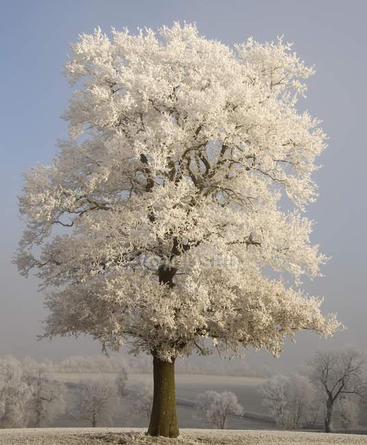Vista panorámica de nieve cubierto de árboles en campo - foto de stock