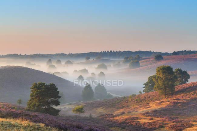 Posbank hills covered in mist, Gelderland, Paesi Bassi — Foto stock