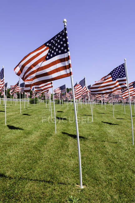 American raised flags on green grass at sunny day, USA — Stock Photo