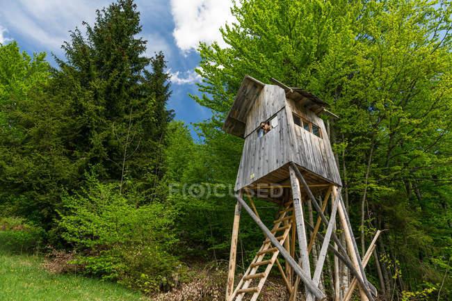 Basso angolo vista di asiatico uomo guardando fuori da legno struttura — Foto stock