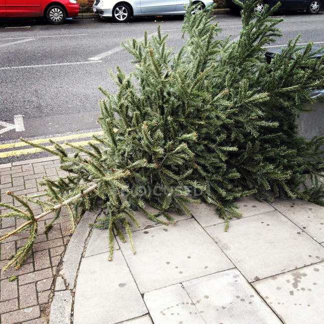 Close up of green fir tree discarded on street — Stock Photo
