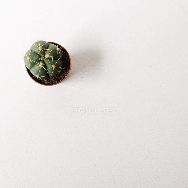 Overhead view of a prickly cactus plant in a pot — Stockfoto