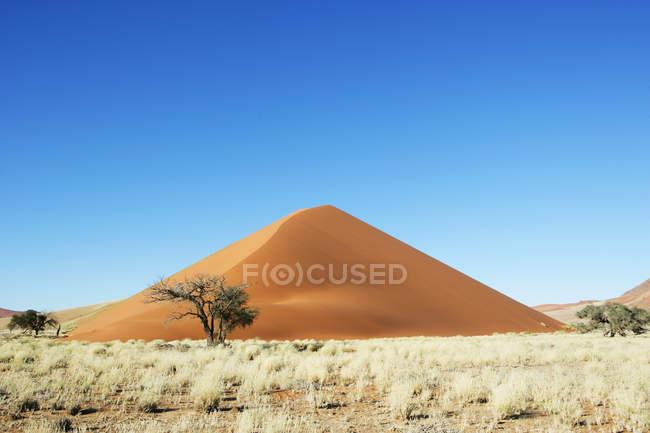 Vue panoramique sur les dunes de sable et les arbres dans le désert, Sossusvlei, Namibie — Photo de stock