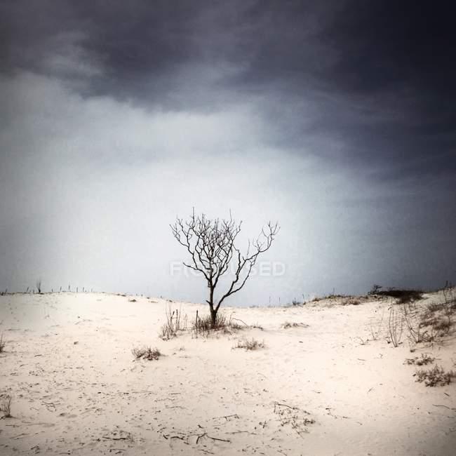 Árvore nua na areia na praia sob o céu cinzento — Fotografia de Stock