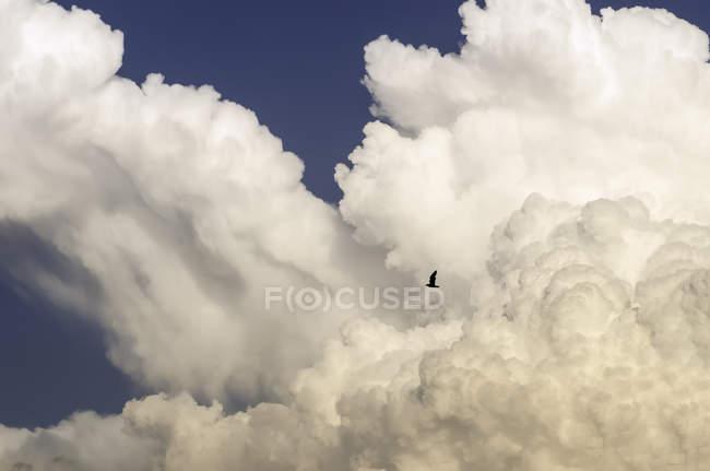 Живописный вид птиц в полете в пасмурное небо — стоковое фото