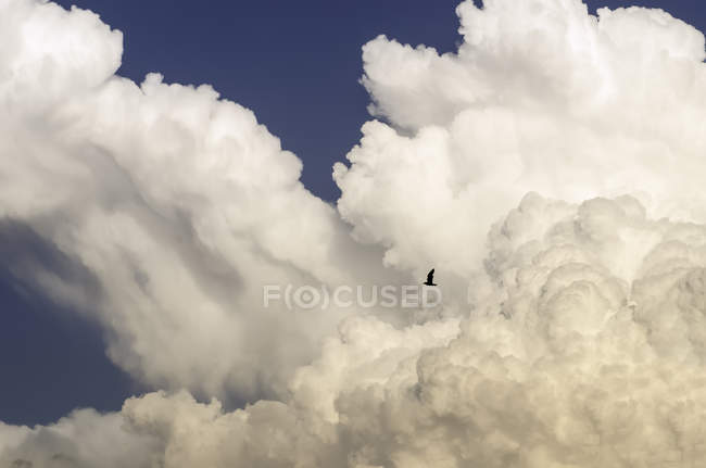 Scenic view of bird in flight in cloudy sky — Stock Photo