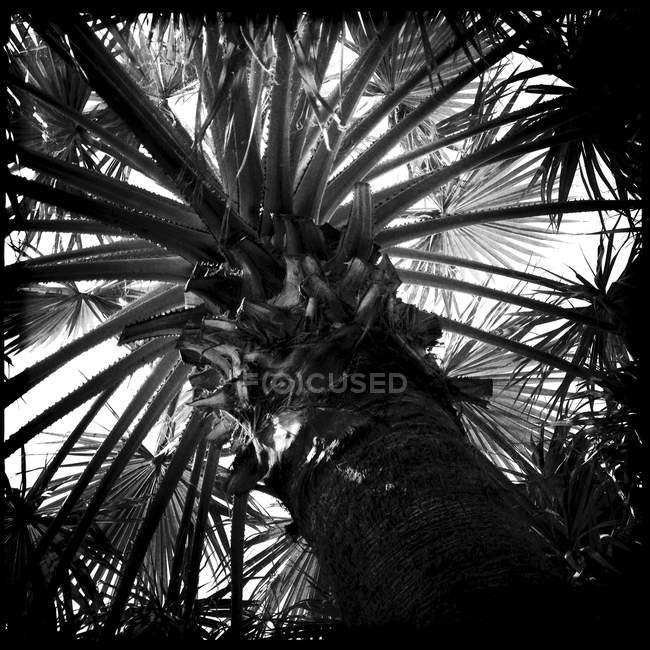 Low angle view of Palm trees in monochrome — Stock Photo