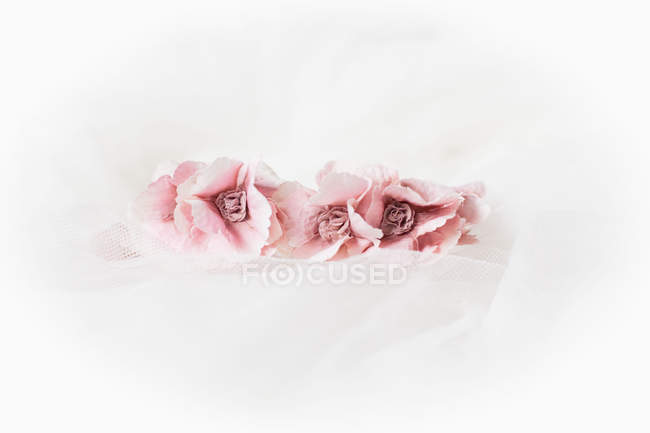 Close-up of Pink flowers on white background — Stockfoto