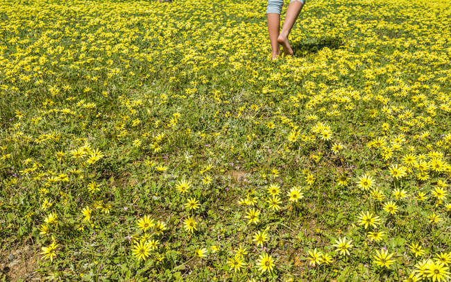 Low section of a girl walking through flowers — Stock Photo