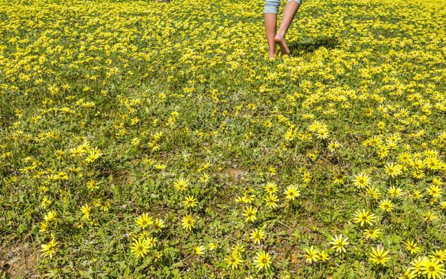 Section basse d'une fille marchant à travers les fleurs — Photo de stock