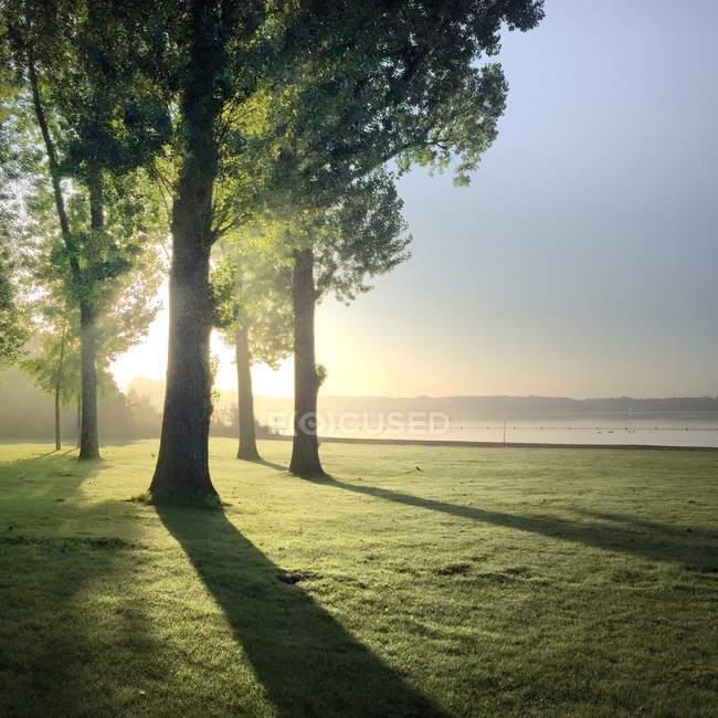 Kralingse Bos landscape in morning, Rotterdam, Holland — Stock Photo