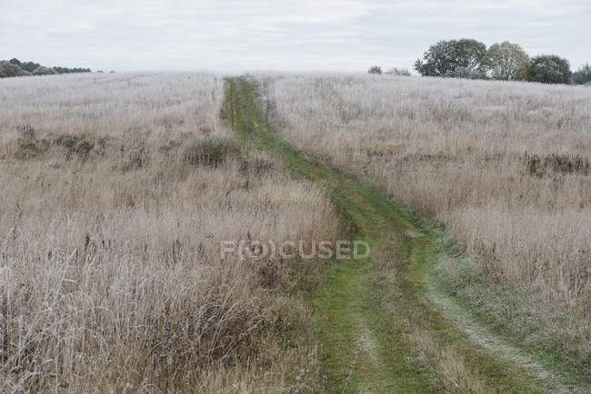 Scenic view of path through the frozen countryside — Stock Photo
