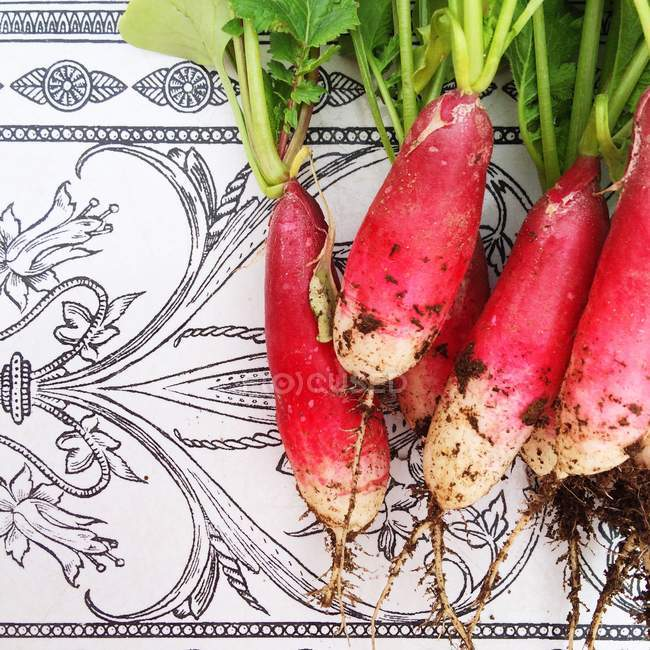 Freshly picked radishes on ceramic table top — Stock Photo
