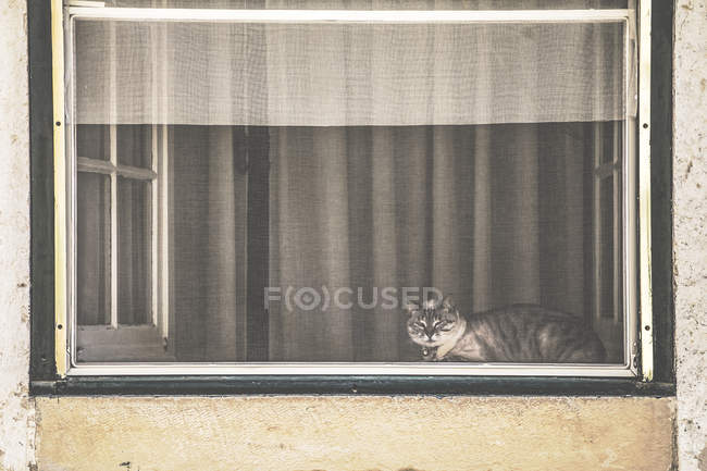 Cute fluffy cat sitting in window — Stock Photo