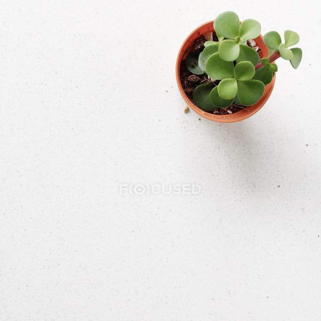 Overhead view of a succulent plant in a flower pot — Stock Photo