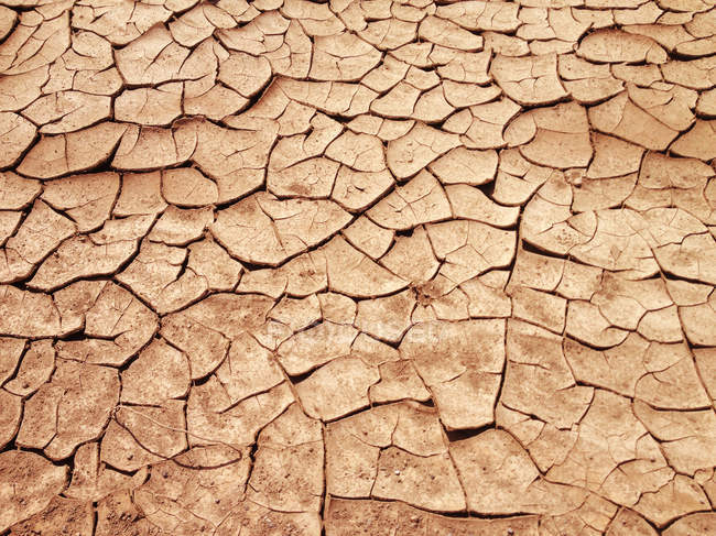 Cracked earth, Dried out land in drought — Stock Photo