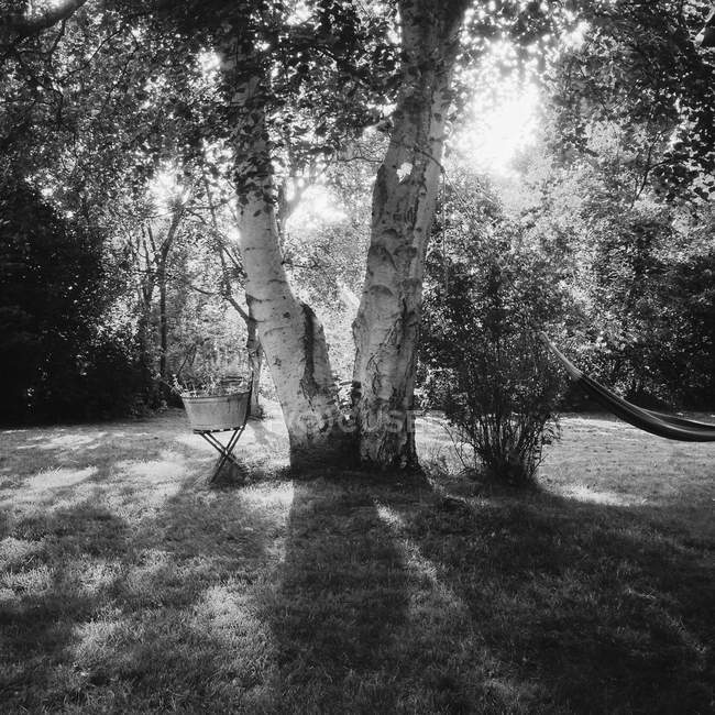 Scenic view of pair of trees in garden, monochrome — Stock Photo