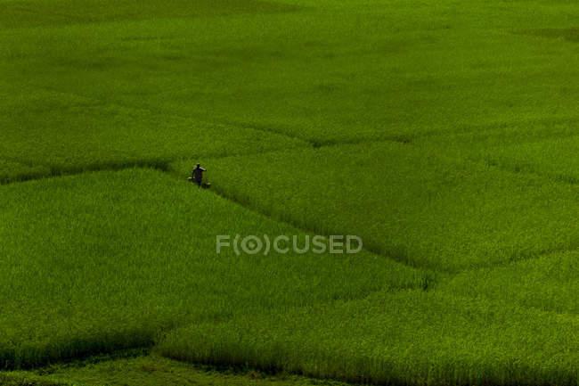 Unrecognizable person walking through green grass carpet — Stockfoto