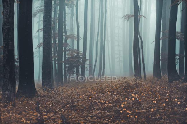 Misty forest landscape, Sljeme, Zagreb, Croatia — Stock Photo