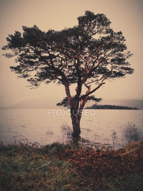 Ireland, County Kerry Ireland, Killarney, Munster, Tree at lake in Killarney National Park — Stock Photo