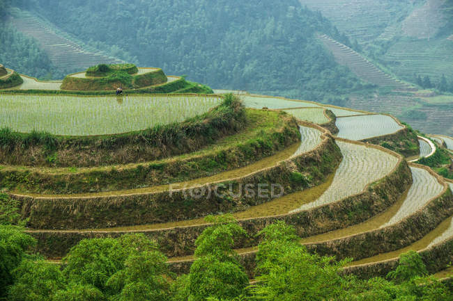 Malerische Aussicht auf Reisfeld Terrassen, Guilin, China — Stockfoto