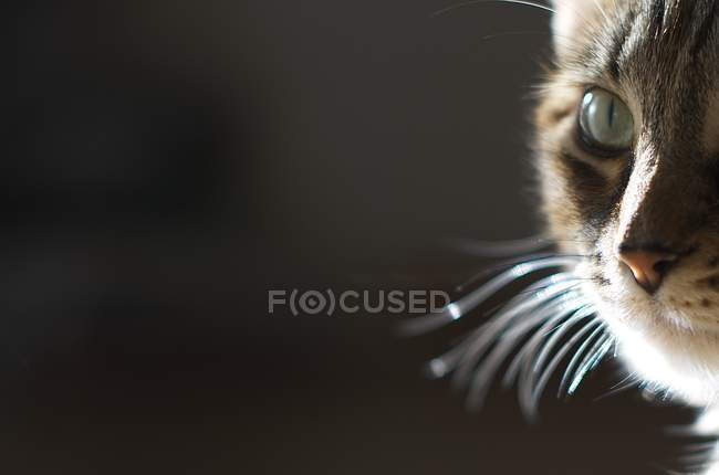 Close-up of cat muzzle against black background — Stock Photo