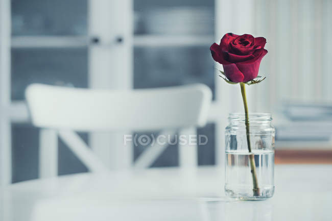 Свежая красная роза в банке на обеденном столе — стоковое фото