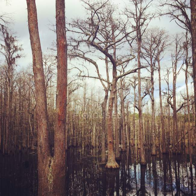 Vista panoramica di pini wishbone, USA — Foto stock