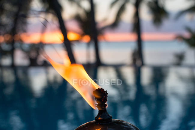 West Indies, Bahamas Fire And Palm Trees — Stock Photo