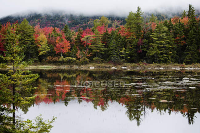 Scenic view of majestic autumn forest reflecting in lake — Stock Photo