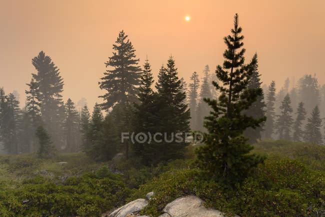 Живописный вид на пожар рядом с Кингс Каньон, Хьюм Калифорния, США — стоковое фото