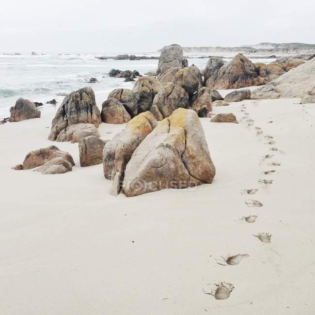 Живописный вид следы в песок на beach — стоковое фото