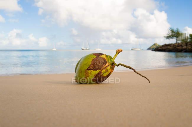 Detailansicht der Kokosnuss am Strand von St. Lucia, Karibik — Stockfoto