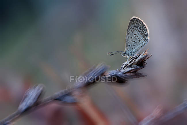Close-up of butterfly sitting on plant in nature — Stockfoto