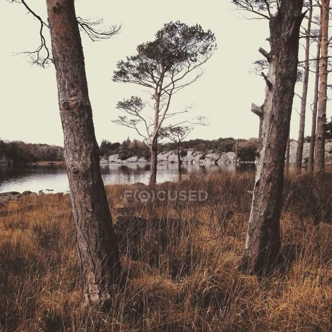 Árvores de Killarney, Munster, Irlanda, Condado de Kerry, Irlanda, ao lado do lago no Parque Nacional de Killarney — Fotografia de Stock