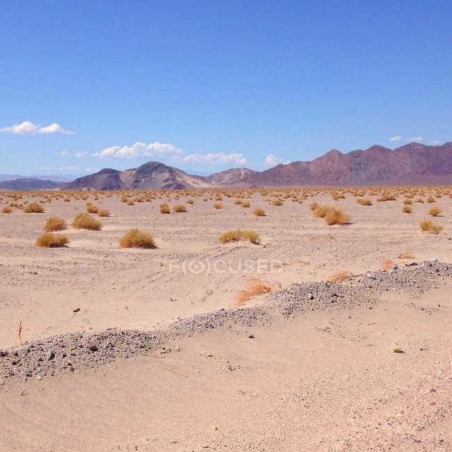 Живописный вид ландшафта пустыни, Невада, США — стоковое фото