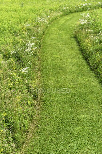 Широкий изогнутый зеленый путь в заповеднике прерий — стоковое фото