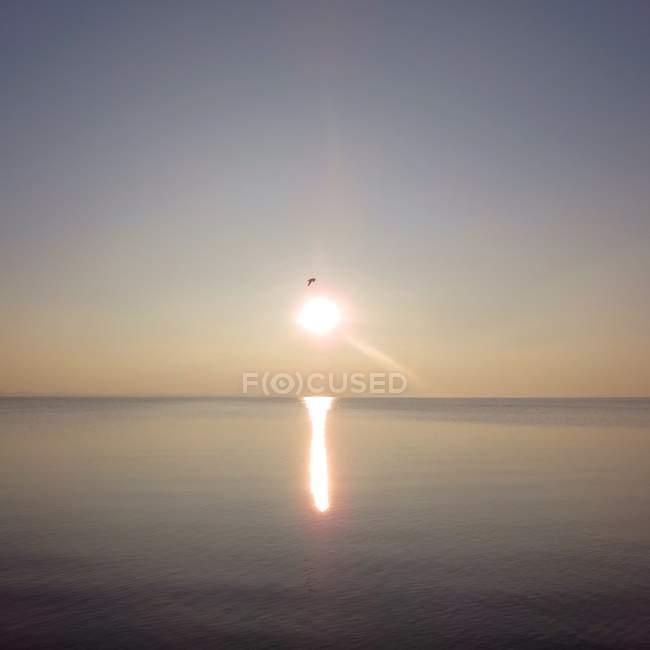 Vista de pájaro volando sobre el mar al atardecer - foto de stock